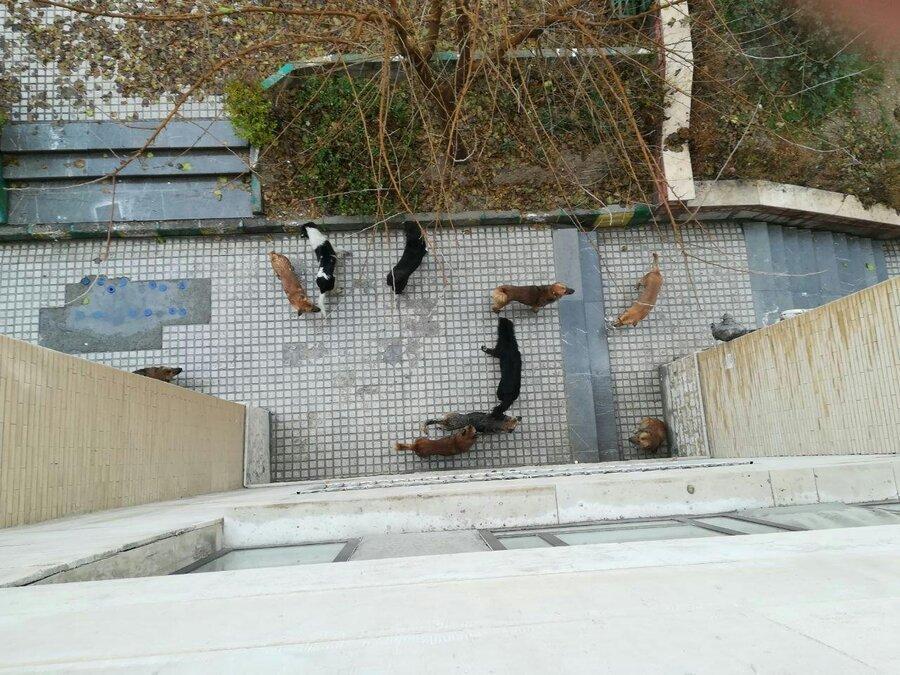 تصمیم جدید برای زنده گیری سگ های بدون صاحب تهران