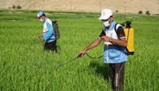فعالیت های گیاه پزشکی جهاد کشاورزی خراسان شمالی برای کاهش بیماری های برگی