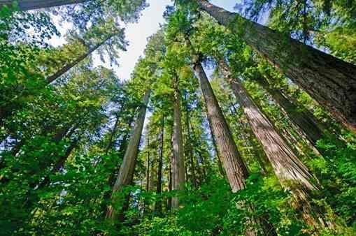 نخستین همایش ملی پتانسیل های صنعتی گونه های چوبی تندرو در دانشگاه علوم کشاورزی گرگان برگزار می شود
