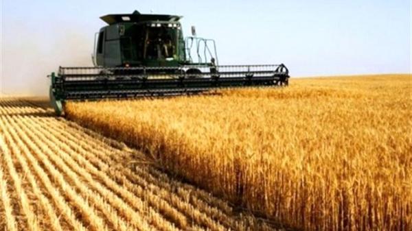 اعلام نرخ جدید گندم برای سال زراعی 1399- 1400